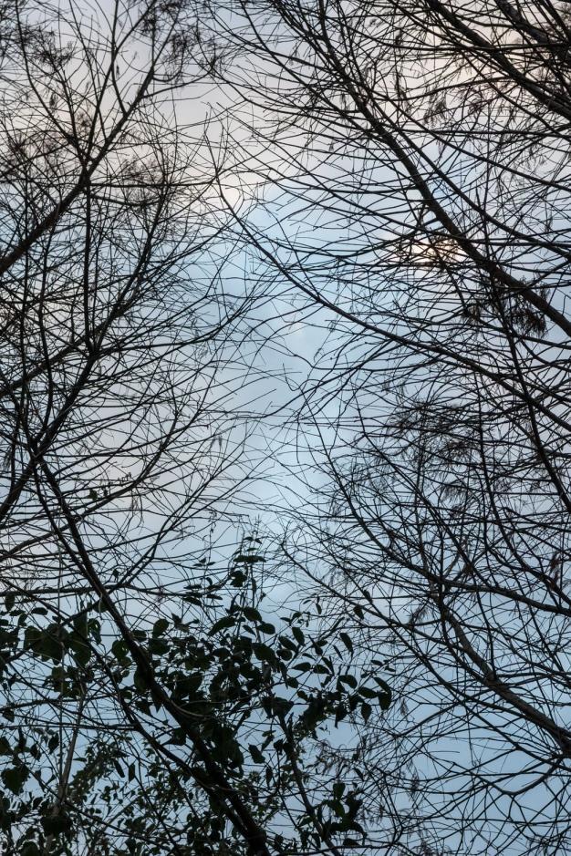 Sky Framed By Trees