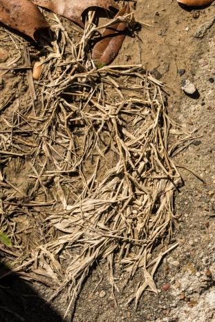 Dead Grass Profile